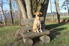 Tina (2010)Mischling/Hunde