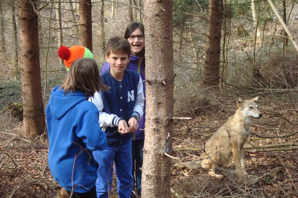 Der Wolf in der Nähe Liechtensteins