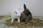 Sunny (weiss) und Bunny (braun)(2014)Kaninchen/Kleintiere