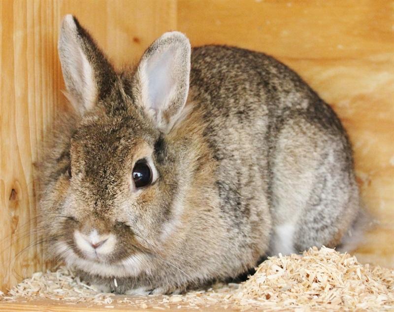 Zora (2013)Kaninchen/Kleintiere