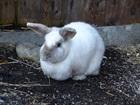 Konrad (2011)Kaninchen/Kleintiere