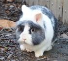 Wolly (2015)Kaninchen/Kleintiere