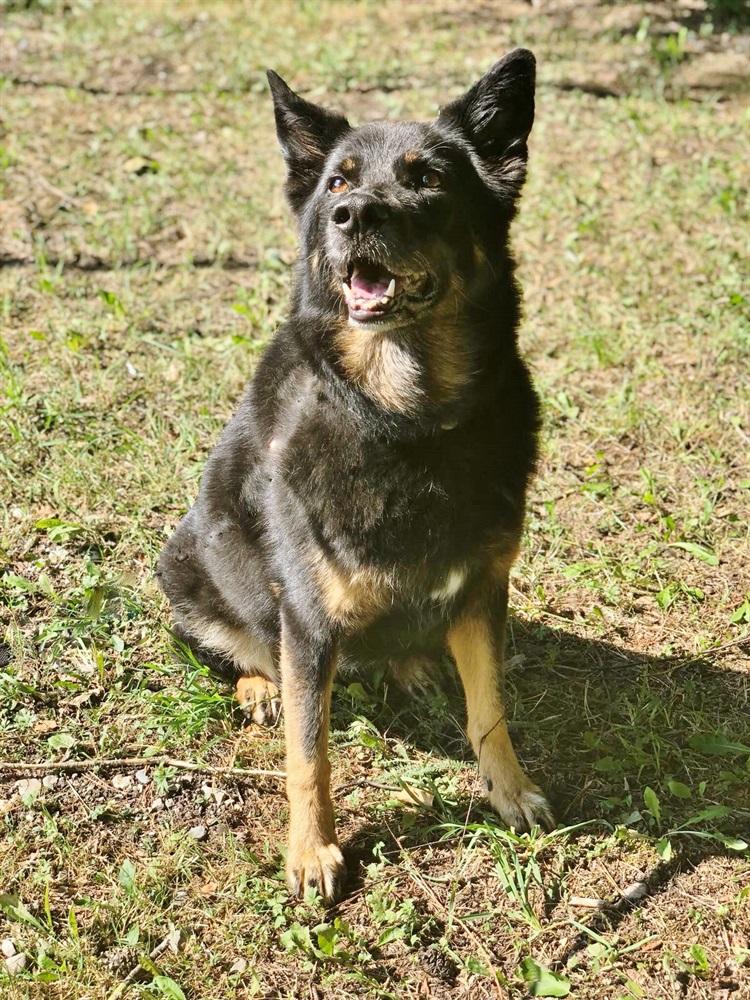 Laika (2007)Schäfermischling/Hunde