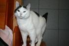Sissi (2005)EHK/Katzen