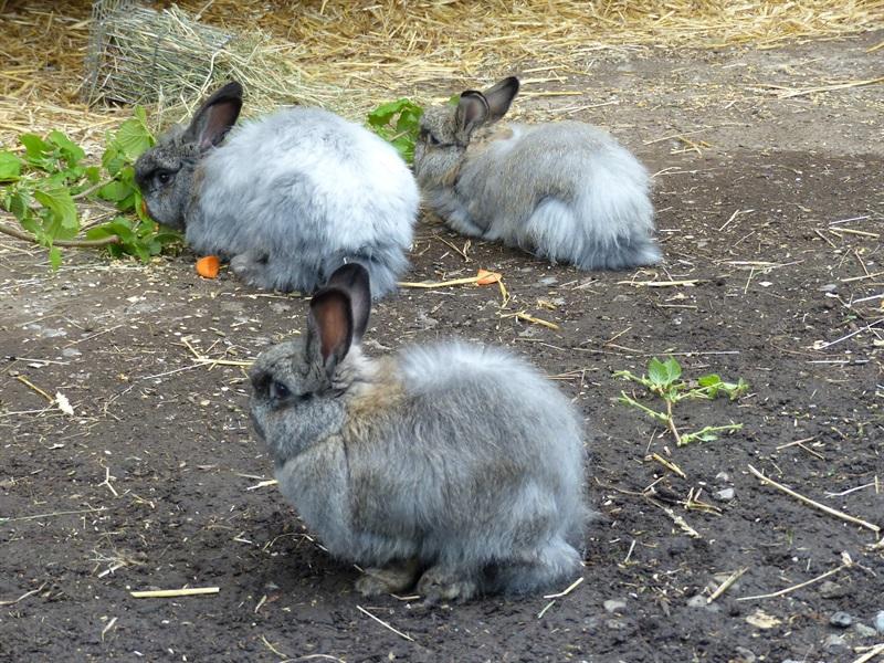Winnie, Flöckle und Flynt (2014)Kaninchen/Kleintiere