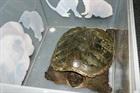 Schildkröte()Schildkröte/Kleintiere