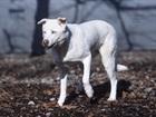 Woolk(2009)Huskymischling/Hunde