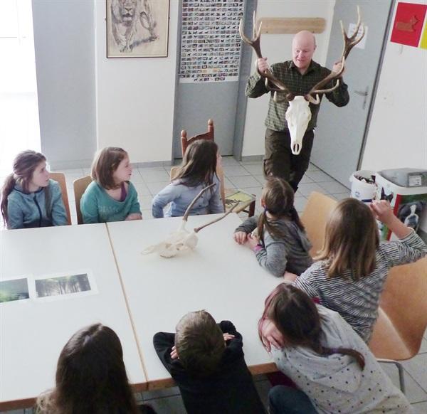 Rothirsch - Tier des Jahres 2017