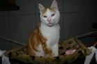 Maddox (2008)EHK (Europäische Hauskatze)/Katzen