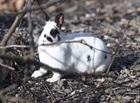 Fabiola(2012)Kaninchen/Kleintiere