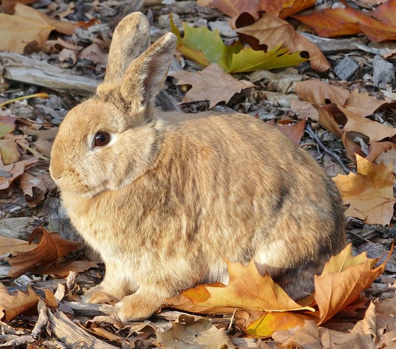 Stupsi (2015)Kaninchen/Kleintiere