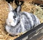Flöckle(2011)Kaninchen/Kleintiere