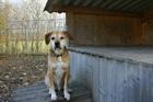 Benni(2006)Mischling/Hunde
