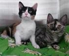 Kimba & Nila(0)EHK/Katzen