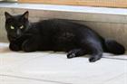 Figaro (2010)EHK/Katzen