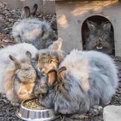 Robin, Winnie, Flöckle, Wuschel, Flynt (2014)Kaninchen/Kleintiere