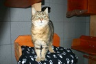 Josy (2008)EHK (Europäische Hauskatze)/Katzen