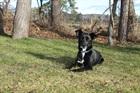 Hootch(2009)Mischling/Hunde