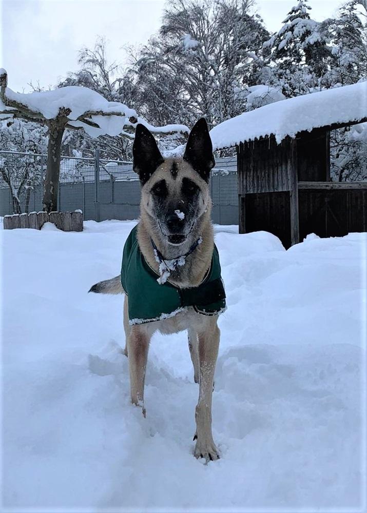 Kira(2009)Malinois-Mischling/Hunde
