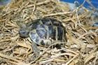Linda(2008)Landschildkröte/Kleintiere