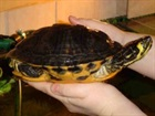 Schildkröten()Schildkröten/Kleintiere