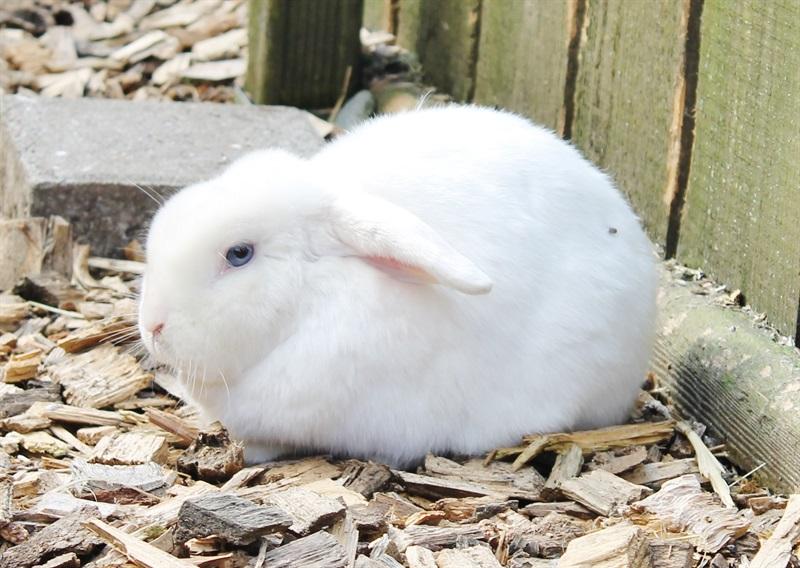Little (2015)Kaninchen/Kleintiere