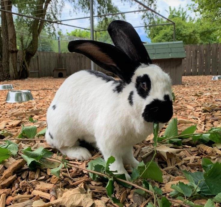 Blevita(2016)Kaninchen/Kleintiere