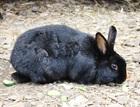 Klara (2010)Kaninchen/Kleintiere
