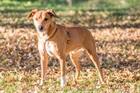 Chicco (2010)Mischling/Hunde