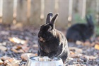 Nero(2014)Kaninchen/Kleintiere