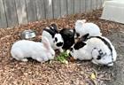 Kaninchengruppe(0)Kaninchen/Kleintiere
