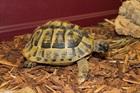 Leon()Griechische Landschildkröte/Kleintiere