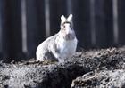 Flecky (2014)Kaninchen/Kleintiere