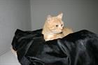 Tiger (2005)EHK (Europäische Hauskatze)/Katzen