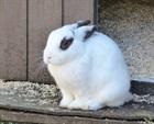 Bounty(2010)Kaninchen/Kleintiere