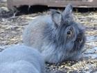 Wuschel(2014)Kaninchen/Kleintiere