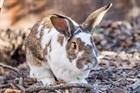 Yanik(2010)Kaninchen/Kleintiere