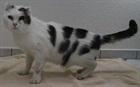 Eddi(0)EHK /Katzen