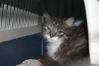 Ebby(0)EHK/Katzen