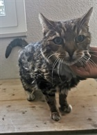 Strubeli(0)EHK/Katzen