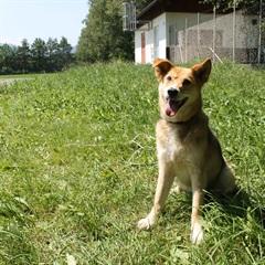 Monti(2004)Mischling/Hunde