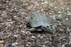 Kevin(0)Landschildkröte/Kleintiere