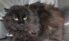 Blacky(0)EHK/Katzen