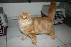Garfield(2012)EHK/Katzen