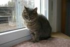 Frau Moritz (1993)EHK (Europäische Hauskatze)/Katzen