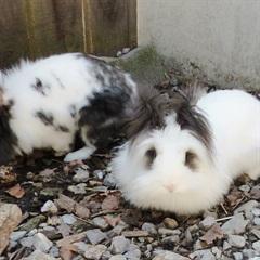 Franz (li) und Sissi (re)(2017)Kaninchen/Kleintiere