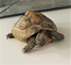 Schildi bitte Abholen(0)Landschildkröte/Kleintiere