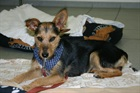 Füli (2011)Terrier-Mischling/Hunde