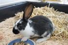 Alessia(0)Kaninchen/Kleintiere