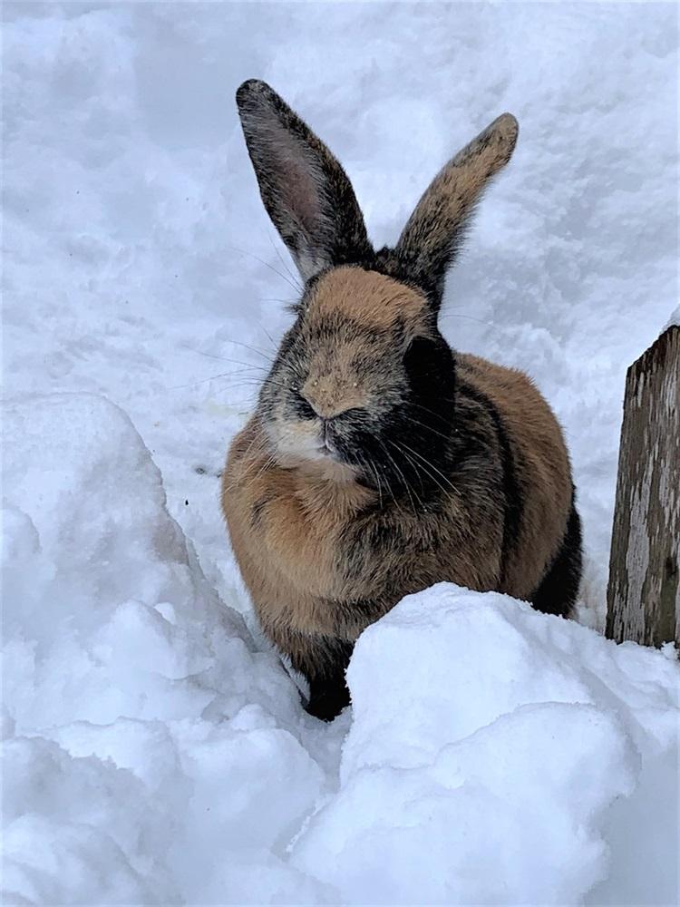 Winnie, Flöckle, Flynt und Rosemarie (Foto)(2014)Kaninchen/Kleintiere